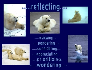 polar-bears-reflecting-21