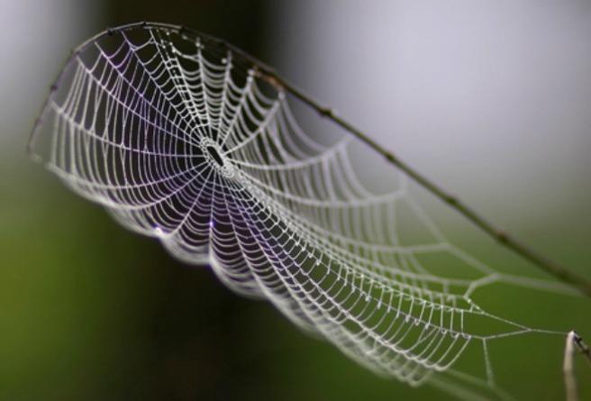 web-resized
