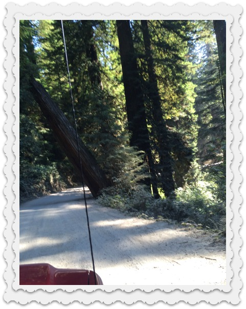 August 2016 - redwood forest